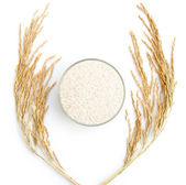 Rýže a rýžových na bílém pozadí — Stock fotografie