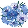 Bouquet from blue and lilac cornflowers - Stock Vector