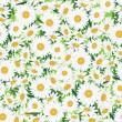 Stock Vector: Seamless chamomile background