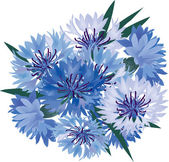 Bouquet from blue and lilac cornflowers — Stock Vector