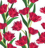 Red tulips seamless floral pattern on white background — Stock Vector