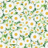 Seamless chamomile background — Stock Vector