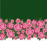 Peônias de flores cor de rosa — Vetor de Stock