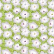 Stock Vector: Floral seamless pattern with white flowers petunias