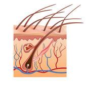 структуры человека кожи и волос. векторные иллюстрации. — Cтоковый вектор
