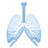 Human lungs and bronchi — Stock Vector