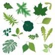 Isolated leaves vector set. summer nature decor. — Stock Vector #24491809