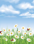 Fresh spring flowers seamless border. sky background. Grass, chamomiles, butterfly. Decor edge. Summer. — Stock Vector