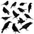 Set of birds silhouette. Vector illustration — Stock Vector