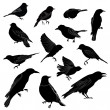 Set of birds silhouette. Vector illustration — Imagens vectoriais em stock