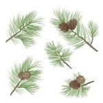 gałąź drzewa sosna tło. wzór lasu. Sosna stożek kolekcja — Wektor stockowy