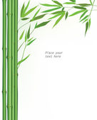 Bamboo floral background. vector floral wallpaper. Wooden border over white background with copy space. — Stock Vector