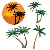 Set of various palm trees. Objects isolated. Tropical sunset beach with palm trees icon. Vector tropical collection. — Stock Vector