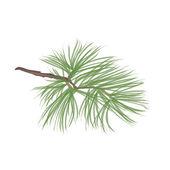 Pinecone collectie — Stockvector