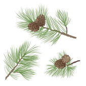 Pine tree branch seamless background. forest seamless pattern. Pine cone Collection. — Stock Vector