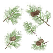 Pine tree branch seamless background. forest seamless pattern. Pine cone Collection. — Vecteur