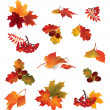 Autumn icon set. Fall leaves and berries — Stock Vector