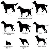 Silhouette Collection of gundog. — Stock Vector