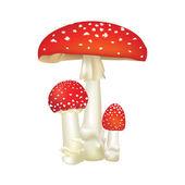 Red poison mushroom — Stock Vector