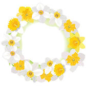 Daffodil vector frame — Stock Vector