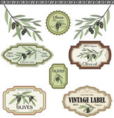 Vintage olive labels set. — Stock Vector
