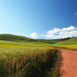 Road through highland barley and rape fields — Stock Photo