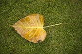Heart-shaped fallen leaf with rain water on green grassland — Stock Photo