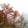 Red maple trees over the hill in autumn — Stock Photo
