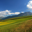 grassland and niuxin mountain — Stock Photo