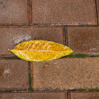 Fallen leaf with rain water on brick ground — Stock Photo