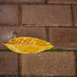 Fallen leaf with rain water on brick ground - Stock Photo