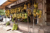 Hanging bananas — Stock Photo