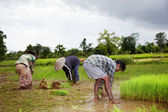 Farmers in southern laos — Stock Photo