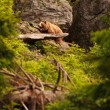 Dangerous Brown Bear walking at the forest. Ursus arctos - Stock Photo