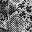 Black and white snakeskin. — Stock Photo #21345445