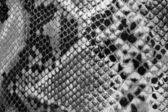 Black and white snakeskin. — Stock Photo