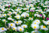 Spring meadow — Stockfoto