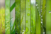Green collage — Stock fotografie