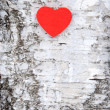 Heart on tree — Stock Photo