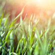 Gentle Spring grass — Stock Photo