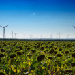 Wind turbines and sunflowers — Stock Photo #20060505