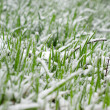 Snowy Spring — Stock Photo