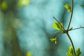 抽象蒲公英种子 — 图库照片