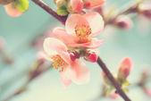 Macro rosa pétalo — Foto de Stock