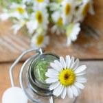 ������, ������: Chamomile Asteraceae flowers