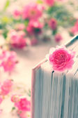 Pink rose and book with roses — Stock Photo