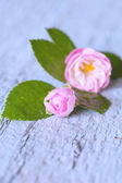 Gentle pink rose on wooden table. — Stock Photo