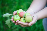 Female hands holding green apples. — Stock Photo