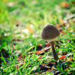 Single mushroom — Stock Photo #27856835