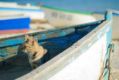 Cat on old boat looking towards to the sea — Stock Photo